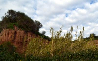 Parco dell'Appia Antica: tra Caffarella e Tormarancia – 11 gennaio 2020