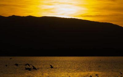 Orbetello: la laguna dei Fenicotteri – 9 febbraio 2020