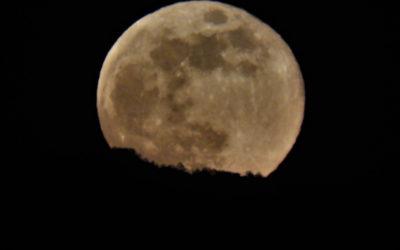 Luna piena in battello nella Riserva Tevere Farfa – 5 settembre 2020
