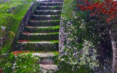 Il Bosco del Serraglio e l'abitato rupestre di Monte Casoli – 13 dicembre 2020