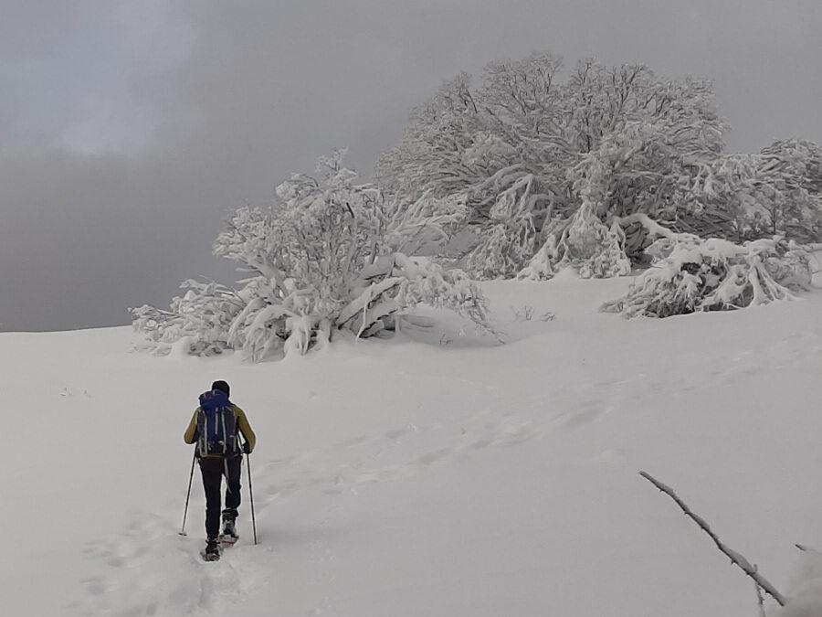 CiaspoleTrek: Rifugio La Fossa – 18 febbraio 2021