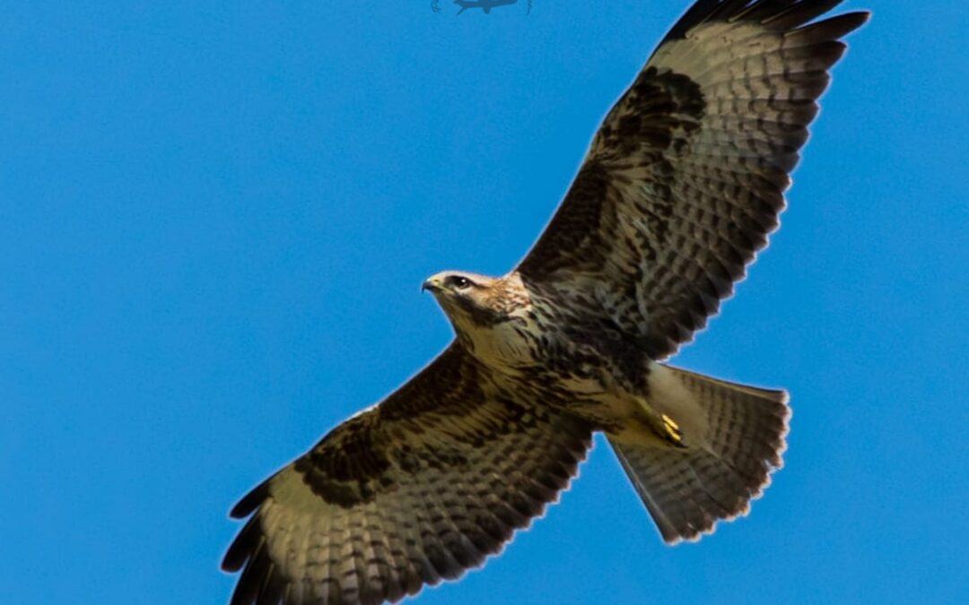 Impariamo a riconoscere gli uccelli del lazio in 7 incontri  – 25 febbraio/11 aprile 2021