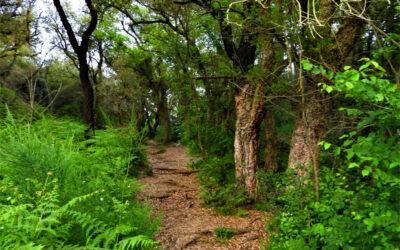 Grande Anello del Parco del Pineto – 17 aprile 2021