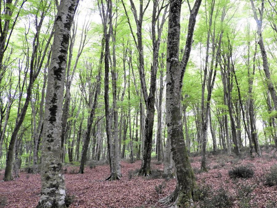 Monte Raschio: una Foresta patrimonio dell'umanità – 30 maggio 2021