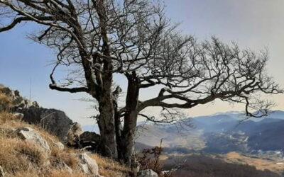 Il Monte Midia e la sua Faggeta – 13 giugno 2021