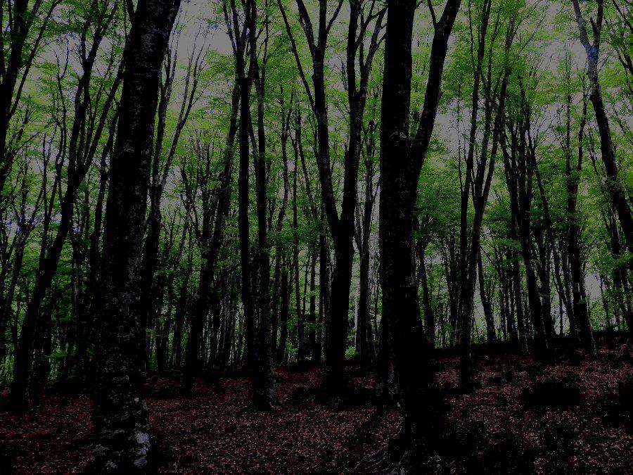 Monte Raschio, una faggeta patrimonio dell'Umanità (Serale)  – 8 agosto 2021
