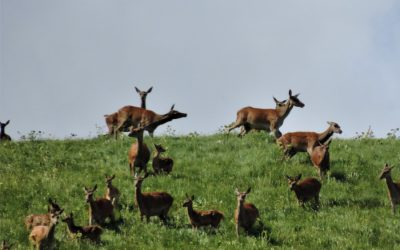 Gli amori dei cervi nel Parco nazionale d'Abruzzo – 18/19 settembre 2021