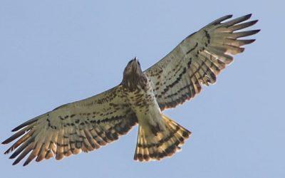 Corso di Birdwatching – 18 novembre / 12 dicembre 2021