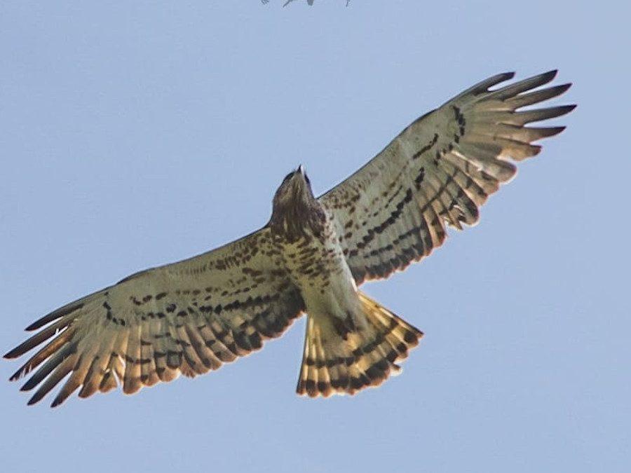 Corso di Birdwatching – 11 novembre / 12 dicembre 2021