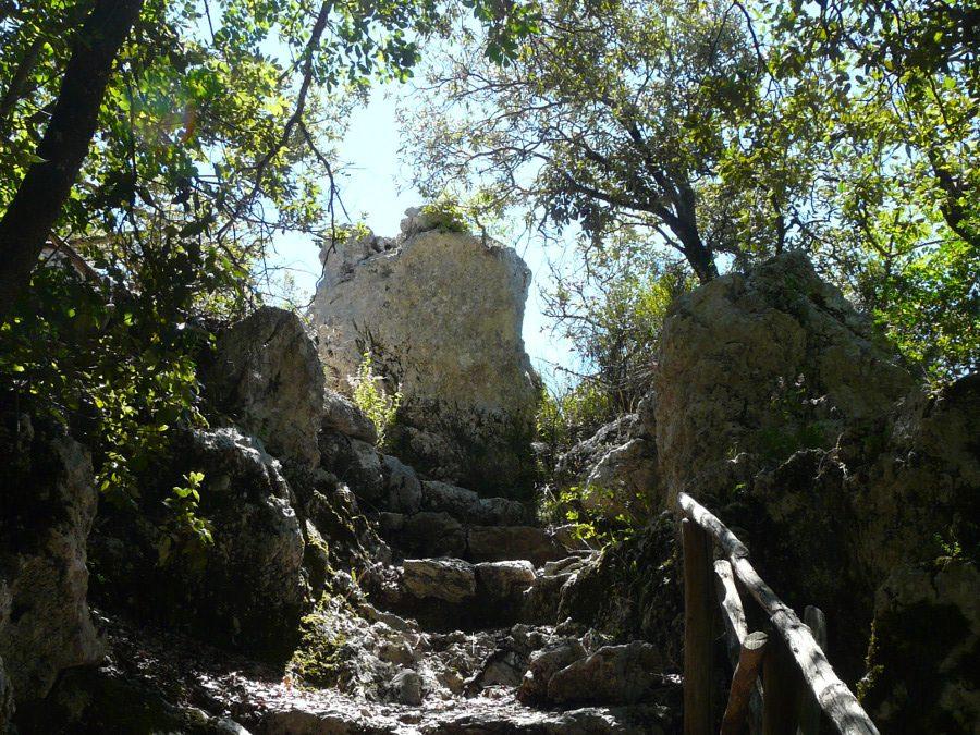 Il bosco sacro di Monteluco, Francesco, la Lex Spoletina – 17 ottobre 2021