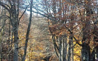 AL COMPLETO Il Sentiero delle Meraviglie: un Anello tra i Boschi – 17 ottobre 2021