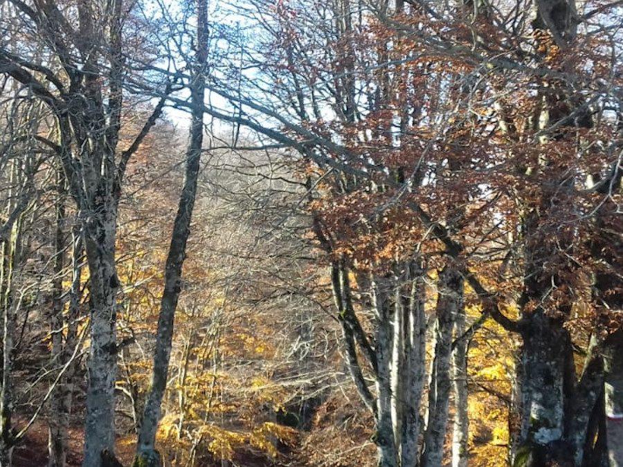 Il Sentiero delle Meraviglie: un Anello tra i Boschi – 17 ottobre 2021